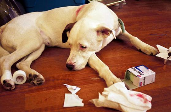 ¿Cómo crear un botiquín para tu mascota?
