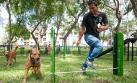 Los perros ganan terreno