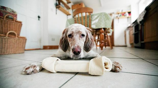 Los huesos pueden perjudicar a tu perro