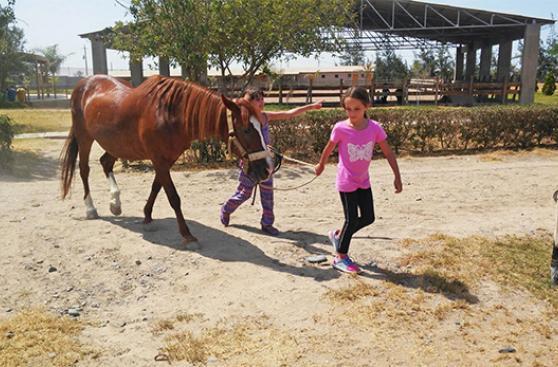 Centro Esperanza y sus 6 caballos de sanación