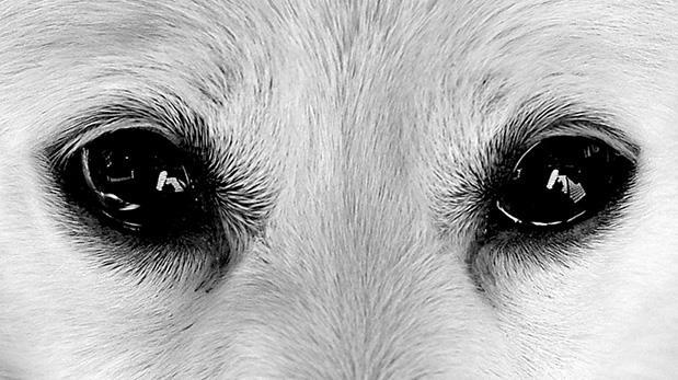 ¿Cómo saber si tu mascota está viendo mal?