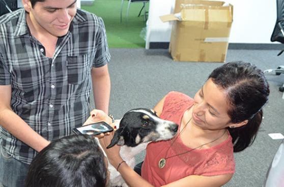 Más oficinas gozaron con perros rescatados