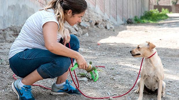 ¿Qué hay detrás de un perro adoptado?