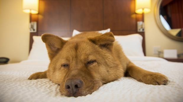 Consejos para tener una casa limpia y a prueba de mascotas