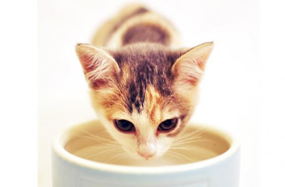 ¿Qué alimentos pueden matar a tu mascota?