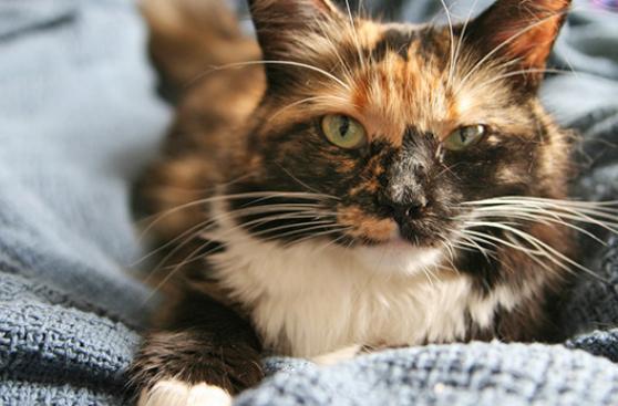 ¿Cómo marcan los gatos su territorio?