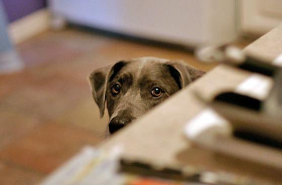 Clase rápida para entender mejor a tu perro