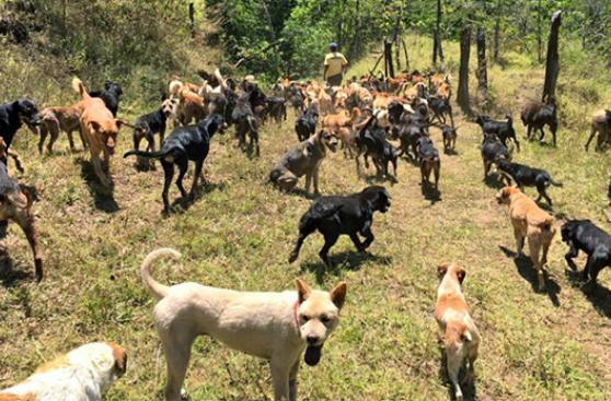 Un paraíso temporal para perros callejeros