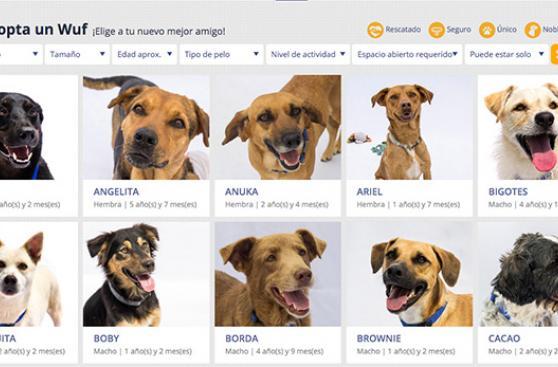 WUF y Mambo se alían en favor de perros abandonados
