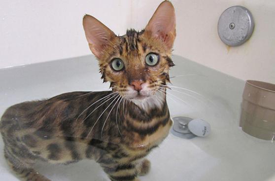 ¡Al agua pato! Y al agua perro, gato, ¿conejo?