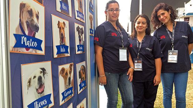 Suiza Vet y ABAXIS apuestan por perros sin hogar