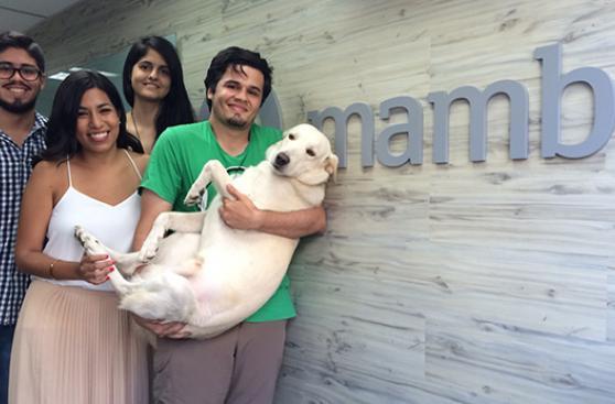 Mambo, la mascota de todos