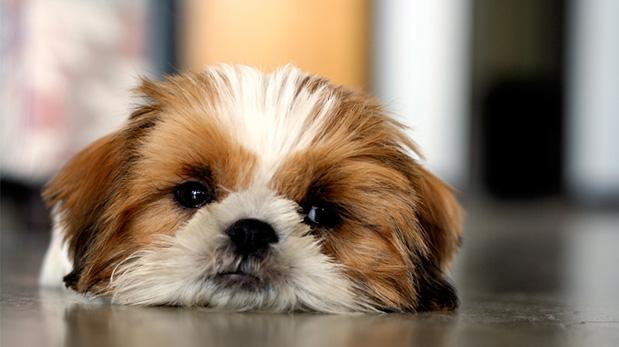 7 síntomas para detectar artritis en mascotas