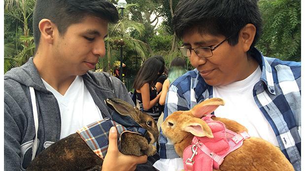 Conoce a esta brigada pro conejos