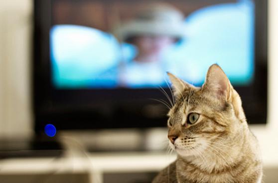 ¿Los perros y gatos ven televisión?