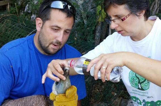 Recorre el mundo ayudando animales con estos voluntariados