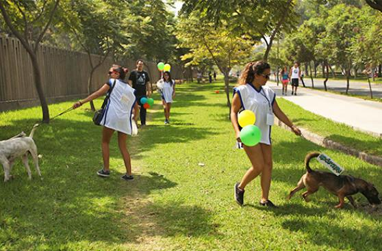 San Borja, al frente en cuidado de mascotas