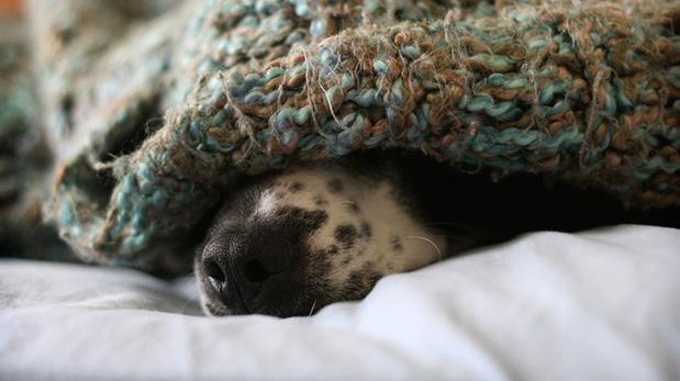 ¿Eres de los que duermen con su mascota?