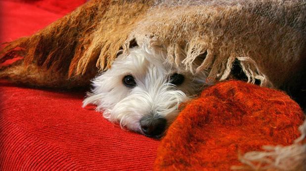 ¿Cuándo las mascotas necesitan psicólogo?