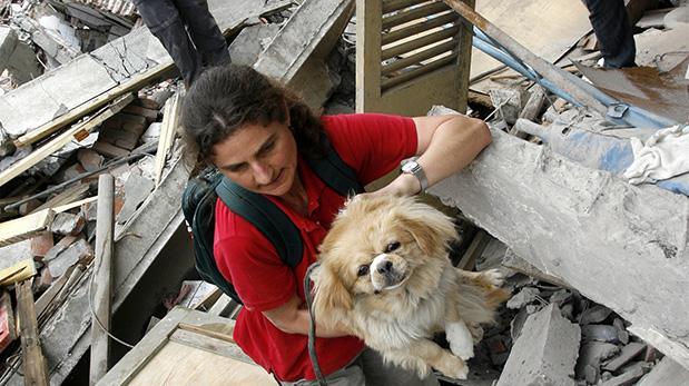 Simulacro de sismo incluirá a nuestros animales