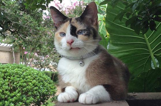 El cascabel puede dejar sordo a tu gato