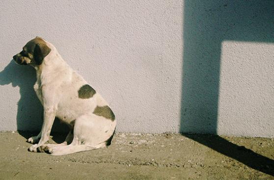 No más perros callejeros en Holanda