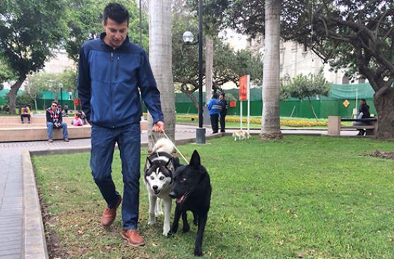 Fausto, Zeus y Theron, contra el maltrato animal