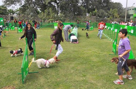 Cómo hacer del parque una gran experiencia