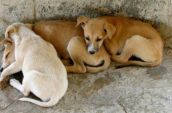 Hoy Perú celebra el Día del Perro