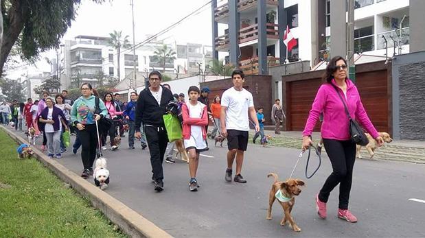 Se solidarizaron con perros sin hogar