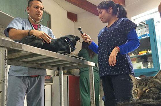 San Isidro se toma en serio a sus mascotas