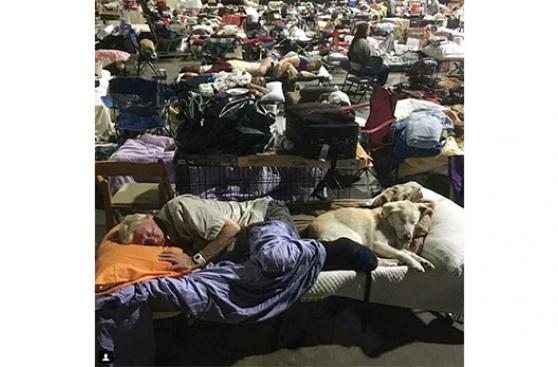 Crisis de espacio en Luisiana para animales