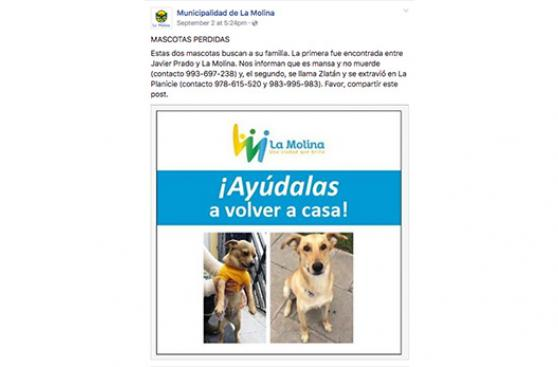 La Molina contra el abandono de mascotas
