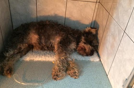 Dueños de perros atacados vuelcan a redes su indignación