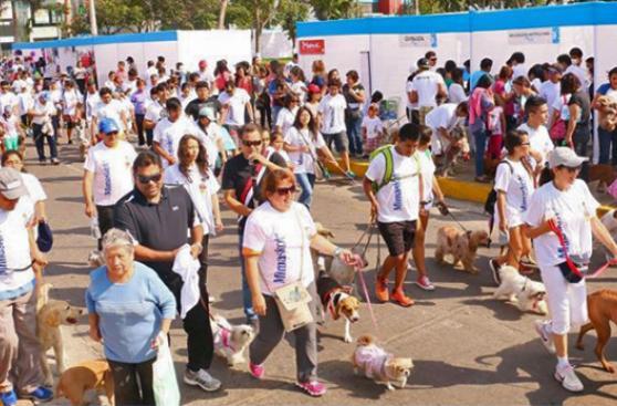 San Miguel, activo en el cuidado de sus mascotas