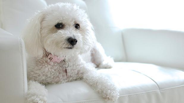 5 malas conductas incitadas por dueños de perros
