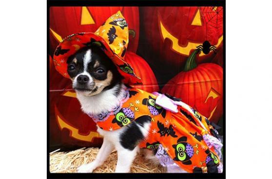 Halloween y mascotas: a prevenir antes que festejar