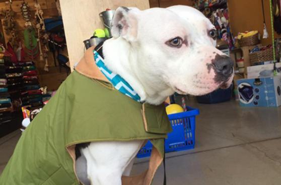 Perro abandonado tras mudanza vuelve a confiar