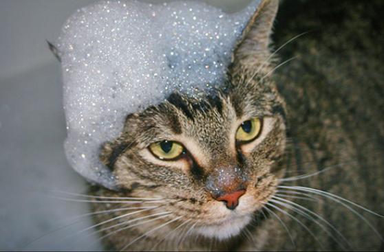 ¿Cómo darle un baño seguro a tu gato?