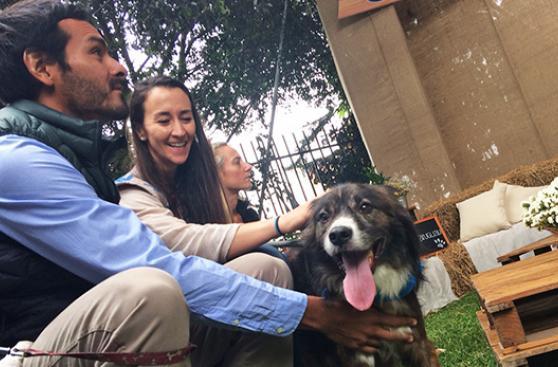 Marca de auto fortalece amistad entre perros y humanos