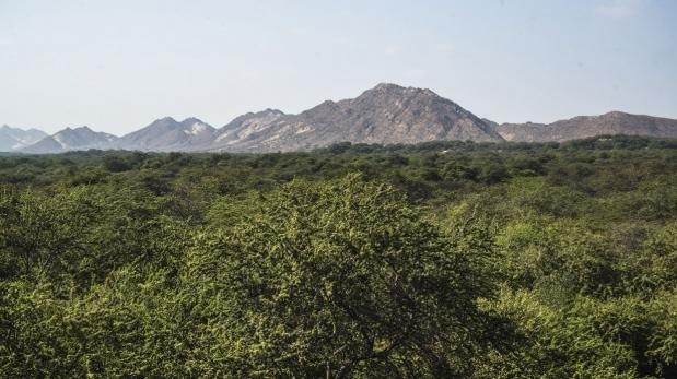 Huaicos: Bosque de Pómac entre las zonas afectadas
