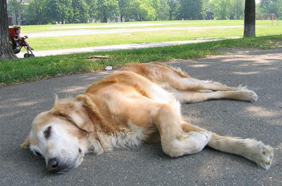 Guía para un verano seguro con tu mascota