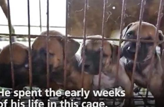 Corea del Sur cerrará mercado que vende carne de perro