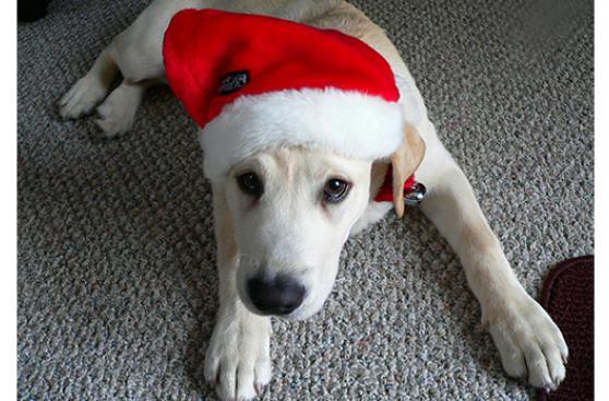 A pensar dos veces antes de regalar mascotas en Navidad