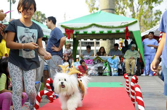 Eventos con mascotas para este fin de semana