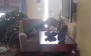 Ciervo entró a su casa y destruyó árbol de Navidad [VIDEO]