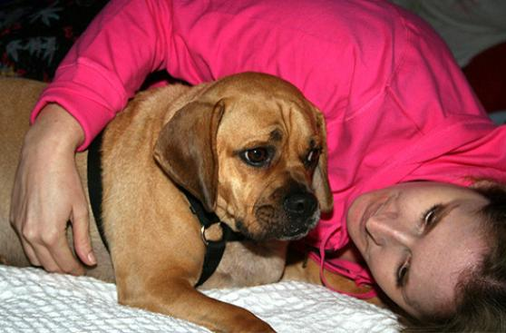¿Cómo calmar a un perro asustado por los fuegos artificiales?