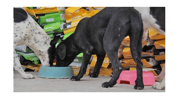 Campaña navideña beneficia a cientos de perros sin hogar