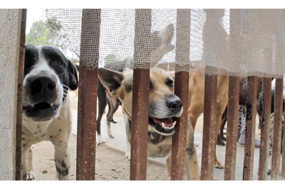 Cientos de perros fueron beneficiados con sorpresa de Navidad