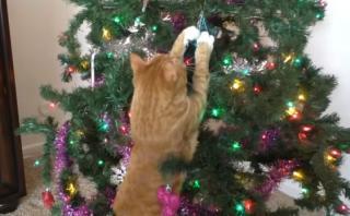 YouTube: esta es la visión que tienen los gatos de la Navidad